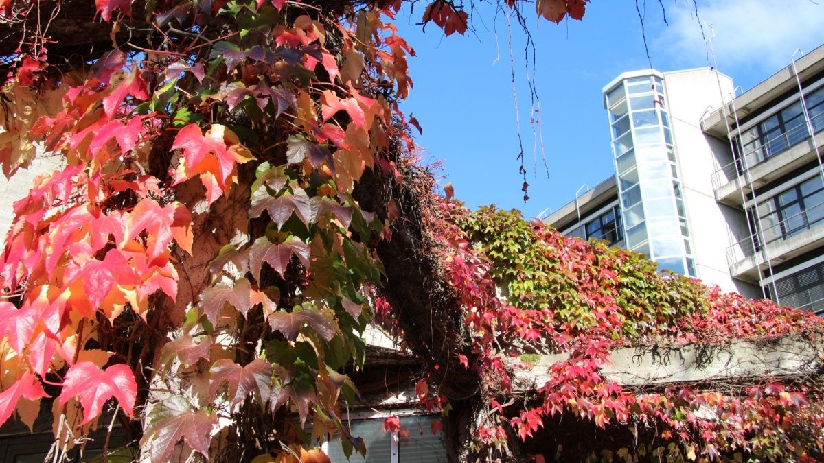 Electrical Engineering Building in Autumn